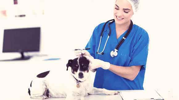 A Dog With A Veterinarian