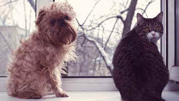 A Dog And Cat Sitting Together In A Window Sill Looking Back Into The Home