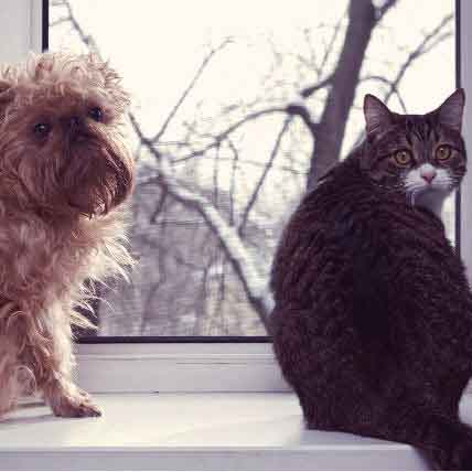 7 Steps to Flea Control in Your Home