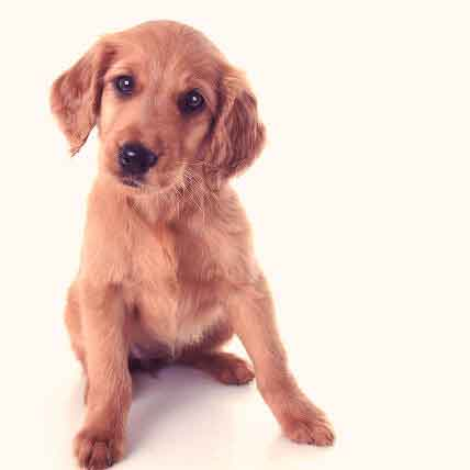 7 Things To Do With Your New Puppy To Prevent Disease