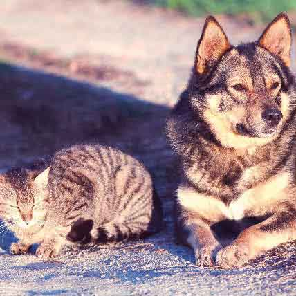 Read Article 8 Flea and Tick Treatments for Dogs and Cats You Didn't Know About