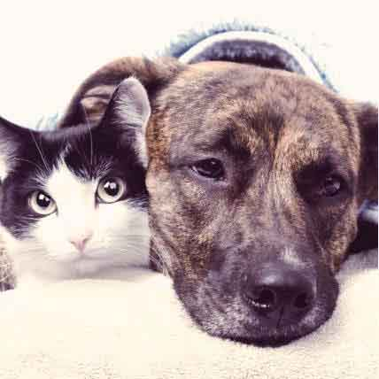 All About Liver Disease in Dogs and Cats