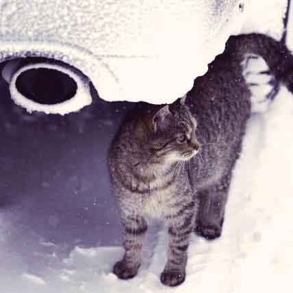How to Avoid Antifreeze Poisoning in Dogs and Cats