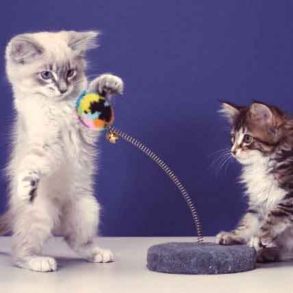 7 of Our Favorite Cat Toys -- A PCRX Pets' Choice