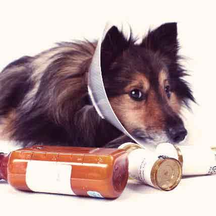 Can I Buy Canadian Pet Meds?