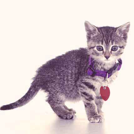 The Best Cat Breakaway Collars and Special Collars