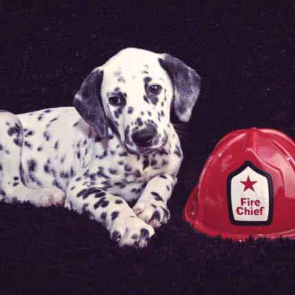 Cat and Dog Fire Safety