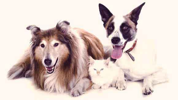 UTI in dogs and cats