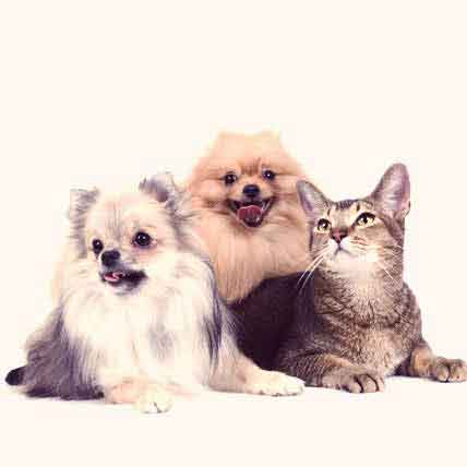 The Causes of Dog and Cat Dandruff