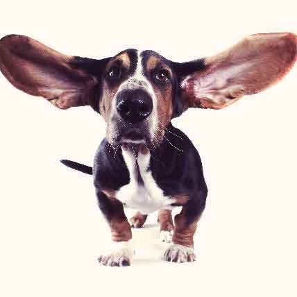Causes of Deafness in Dogs
