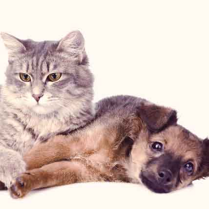 What Causes A Collapsed Trachea In Dogs And Cats