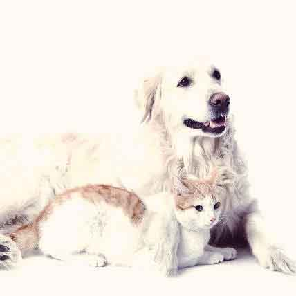 Common Types of Cat and Dog Skin Cancer