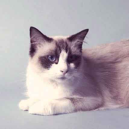 The Cutest Cat Breeds Around