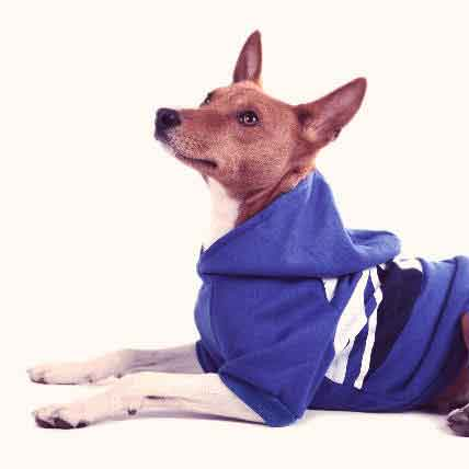 Read Article Summer, Holiday, and Winter Dog Clothes for Pets