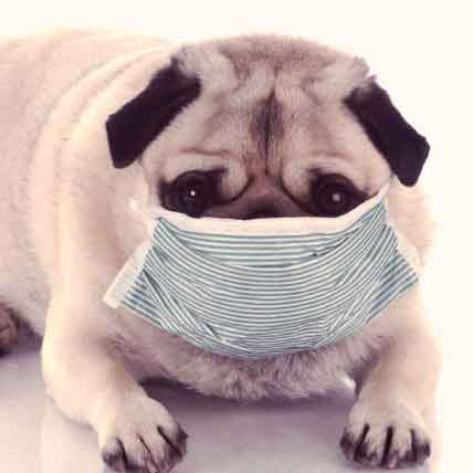 Dog Diseases and Symptoms: A to Z