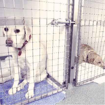 What's the Cost To Kennel A Dog?