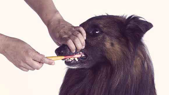 Dog Teeth Cleaning Options