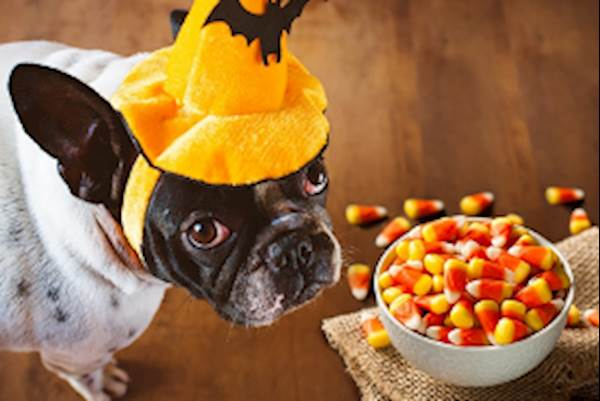 Foods That are Poisonous to Dogs