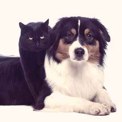 5 Facts About Your Pet's Gastritis