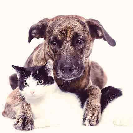 Fibrosarcoma in Cats and Dogs