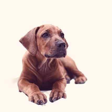 Read Article Why Use A Flea and Tick Spray On Treatment?