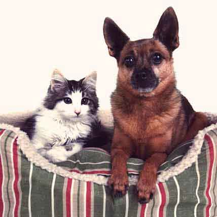 Food to Treat Cat and Dog Urinary Tract Infections
