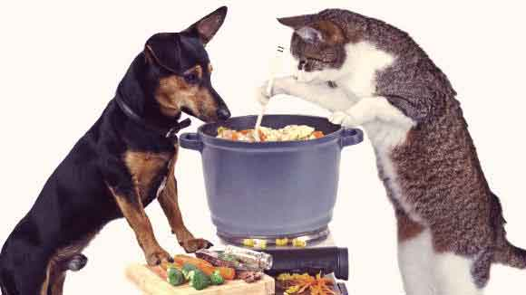 Gourmet Pet Foods to Choose From