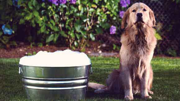 Easy, Green, Dog-Safe Cleaning Tips