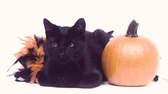 5 Spooky Myths About Halloween Cats