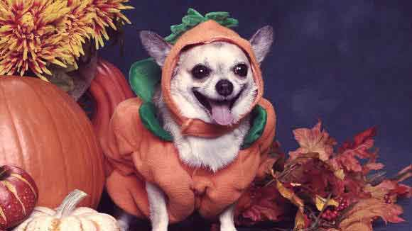 5 Halloween Safety Tips for Pet Parents