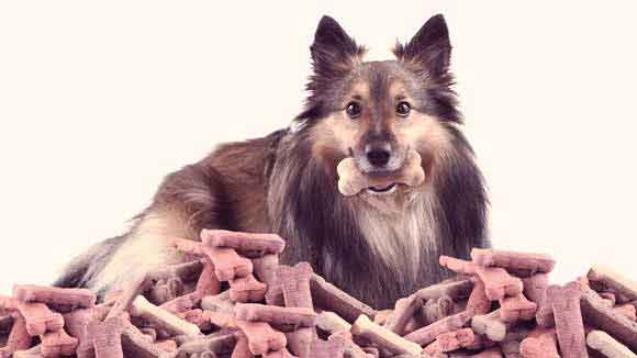 A Nutritious Diet For Your Sheltie Petcarerx