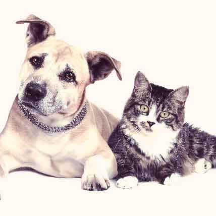 Read Article Hydrocephalus In Dogs And Cats