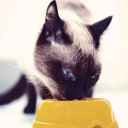 Hypoallergenic Cat Food Brands