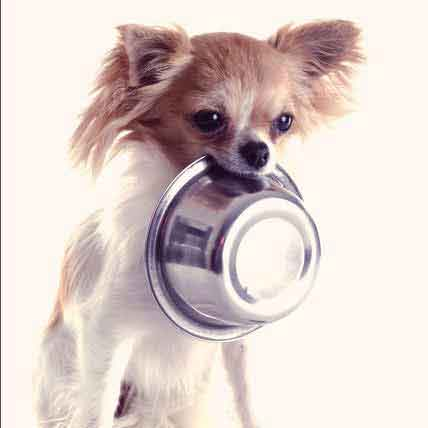What Are Hypoallergenic Dog Foods?