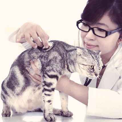Is Your Cat Protected From Feline Calicivirus?