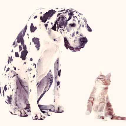 Causes of Kidney Disease in Cats and Dogs