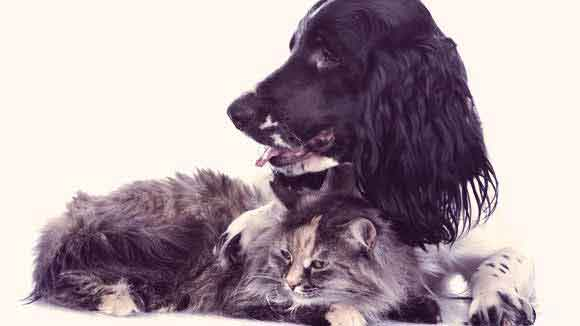 Mast Cell Cancer in Dogs and Cats