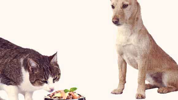 Nutrition for Dealing with Cancer in Dogs and Cats
