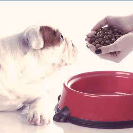 Read Article Nutrition for Your Senior Dog
