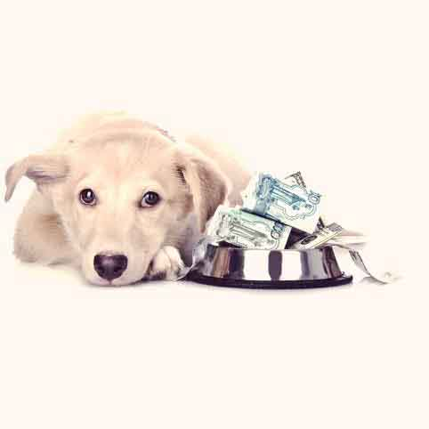 Your Pet Budget: Managing Your Pet Care Needs