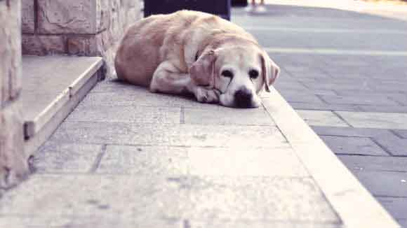 A Lost Dog Laying On The Street