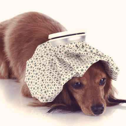 Do Pet Prescriptions Have Side Effects?