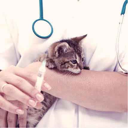 Reasonable Pet Vaccination Costs