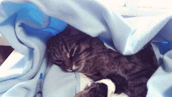 A Sick Cat Receiving Treatment