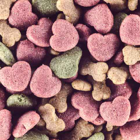 Read Article Find the Right Food For Your Dog