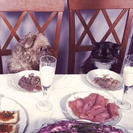 Safely Share a Thanksgiving Meal With Your Pets