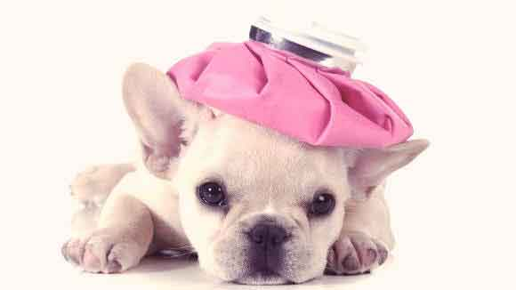 7 Signs of a Sick Puppy - And the Solutions