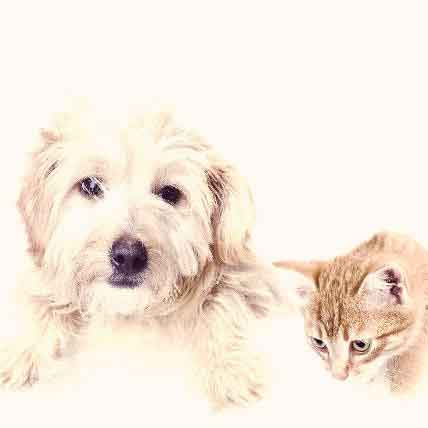 How Much Should Spaying a Pet Cost?