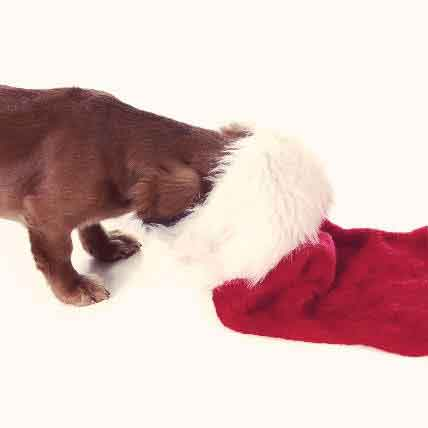 Make (or Buy) Your Own Pet Christmas Stockings