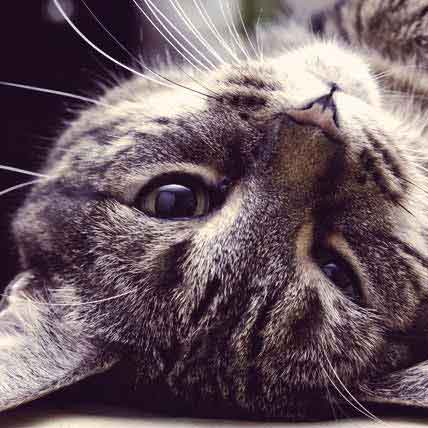 Tips to Avoid Your Cat's Stomach Upsets